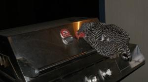 Ms. Grill Chicken!